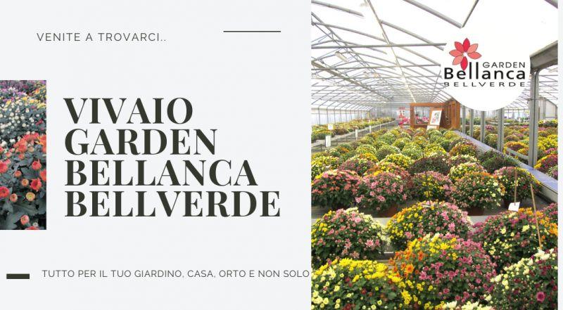 Offerta vivaio a Pordenone – occasione vendita piante a Pordenone