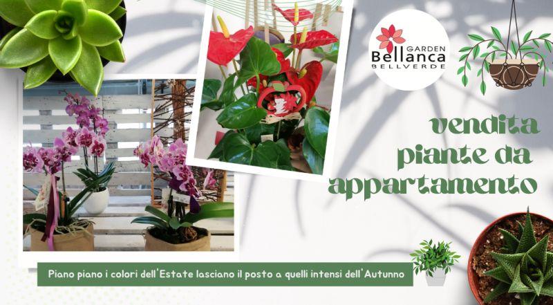Vendita piante da appartamento a Pordenone – offerta piante da interno in vendita a Pordenone