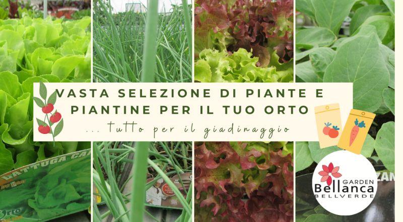 Vendita vivaio piante da orto a Pordenone – offerta tutto per il gardening a Pordenone