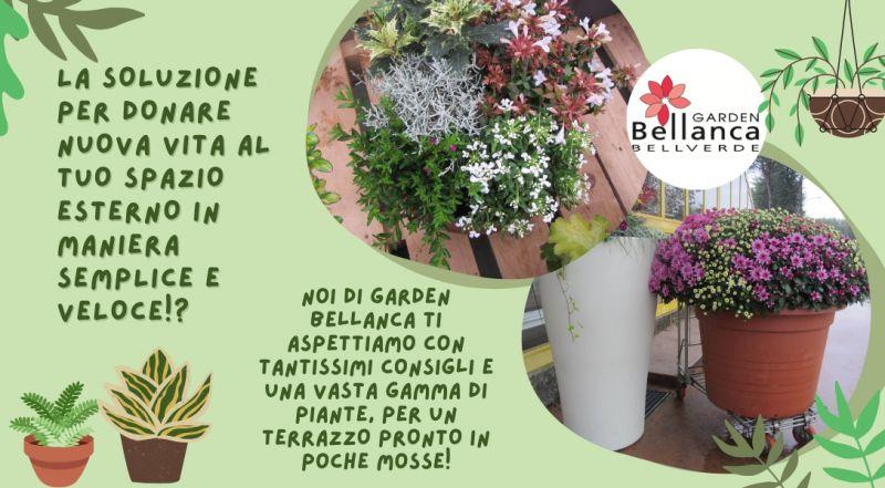 Vendita piante da esterno a Pordenone – offerta vendita piante da frutto a Pordenone