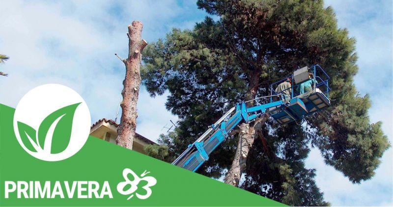 Primavera 83 Elmas - promozione servizio grandi potature alberi alto fusto