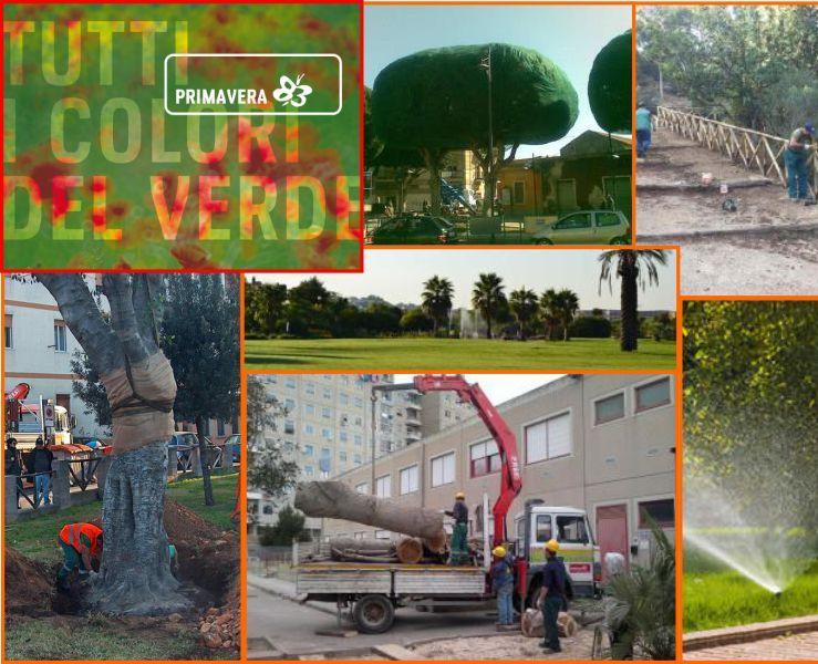 promozione potatura grandi piante - offerta potatura alberi - Primavera 83 Elmas