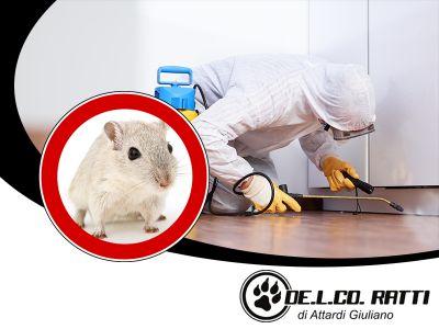 offerta derattizzazione promozione interventi di derattizzazione de l co ratti