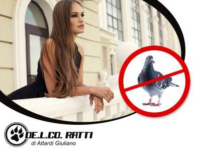offerta allontanamento volatili promozione allontanamento piccioni de l co ratti