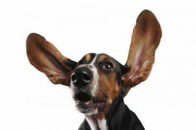 maico vendita e riparazione apparecchi acustici