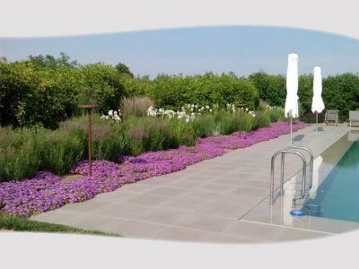 promozione florovivaismo casier offerta giardinaggio casier vivai toppan giacinto
