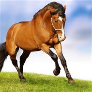 scuderie attrezzature e box per cavalli fontana f lli ti aspetta contattaci
