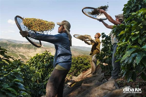 Dal Brasile allo Yemen, in viaggio con McCurry nelle terre del caffè - Diba 70 distributori professionali, rassegna stampa