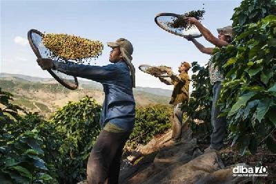 dal brasile allo yemen in viaggio con mccurry nelle terre del caff 232 diba 70 distributori professionali rassegna stampa