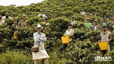 colombia la siccit 224 minaccia uno dei migliori caff 232 al mondo diba 70 distributori professionali rassegna stampa