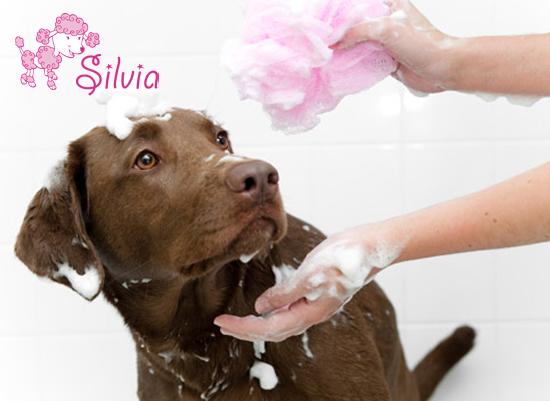 toelettatura silvia trattamenti di pulizia per animali domestici scopri