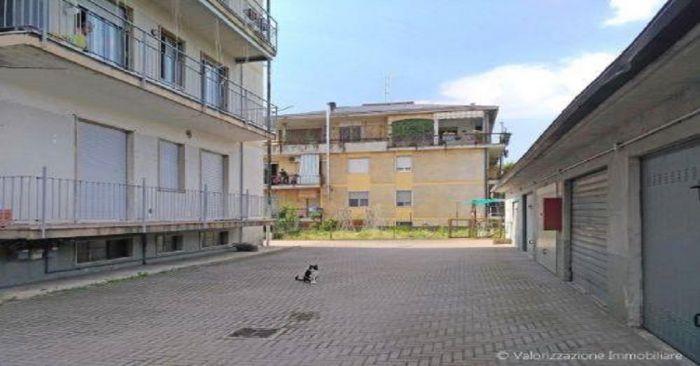 ROSSANA Novara foto 3